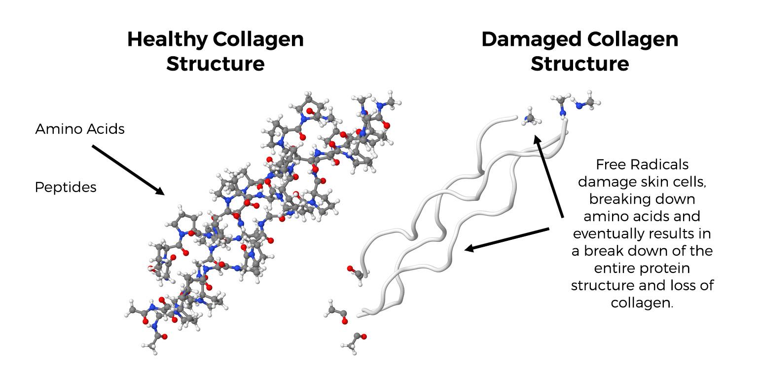 Collagen-protein-strand