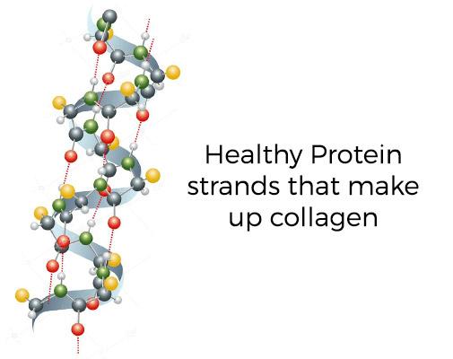 Protein-Strands